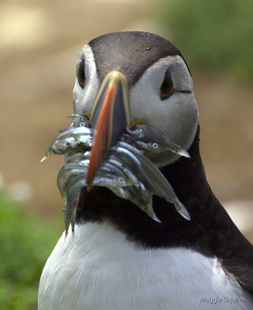 Puffin by Maggie Squires