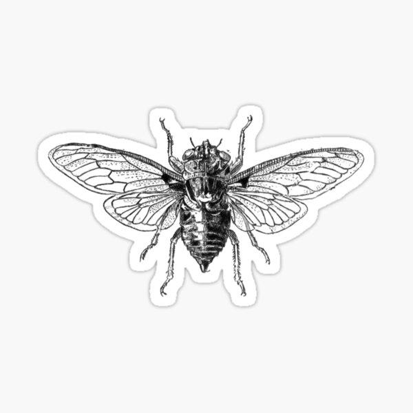 Cicada design - Cicada 3301 | Insect Shirt with Cartoon Sticker