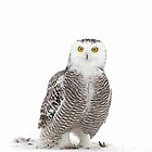 Why yes! I did drink a lot of coffee! - Snowy owl by Jim Cumming