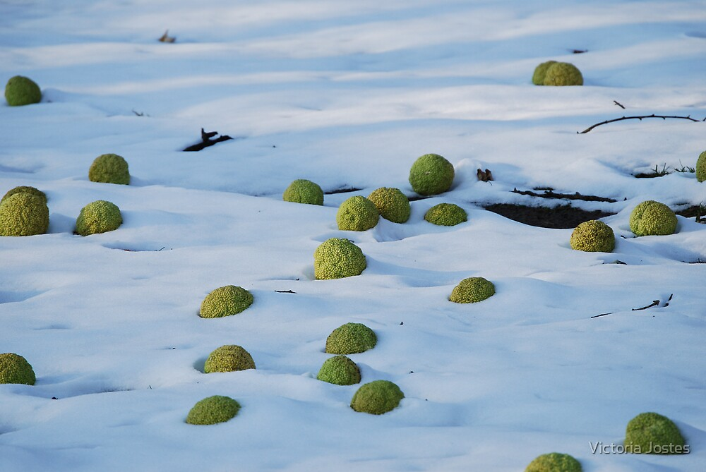Are these really Martian eggs?!  NOOOOO! Mystery solved by Gene Gregory! by Victoria Jostes