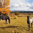 Fall Horses by Brian Hendricks