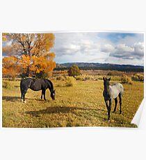 Fall Horses Poster