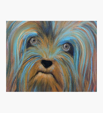 yorkie Photographic Print