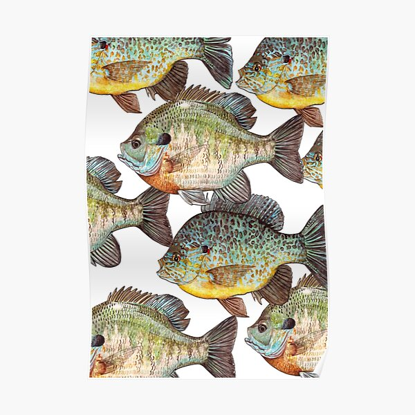Sunfish Poster