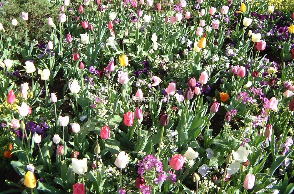 Pretty Tulips by WaleskaL