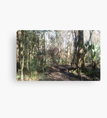Florida Nature Trail Canvas Print