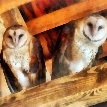 Two Barn Owls by SudaP0408