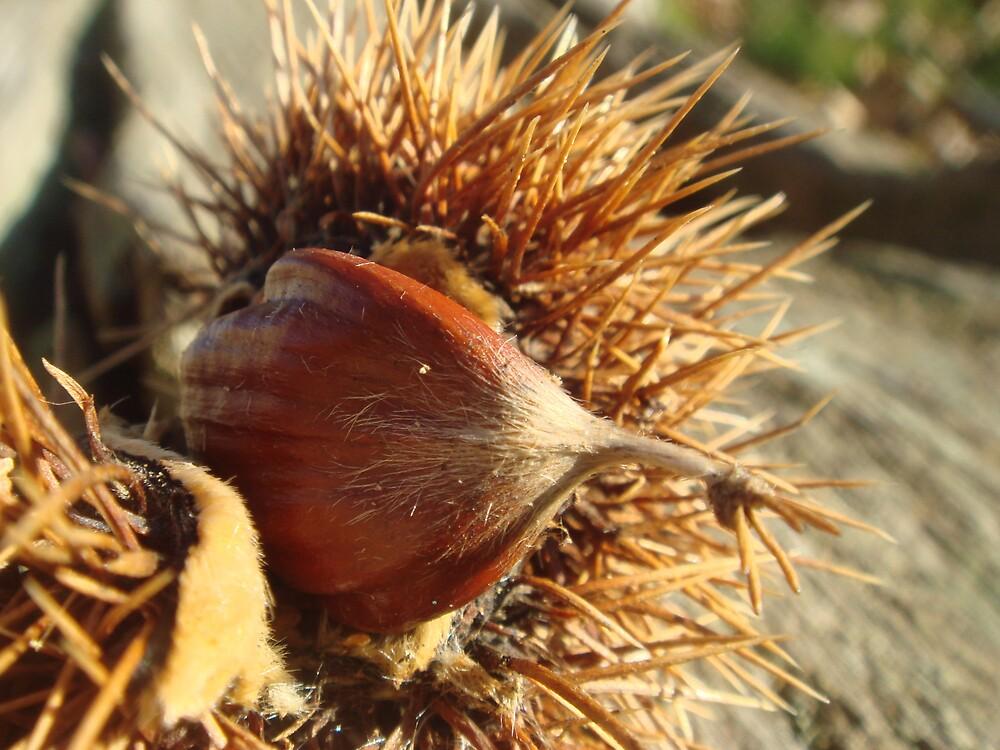 Chestnut by Ollie de Brett
