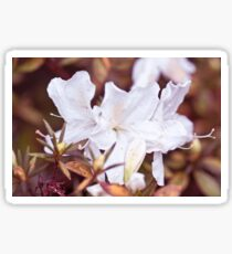 White Flowers  Sticker
