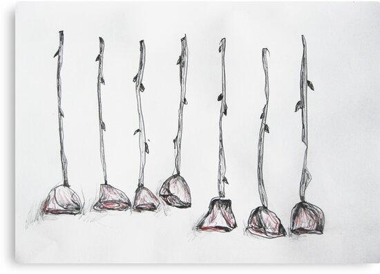 Seven Roses by John Douglas