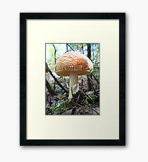 Fat Cap Mushroom Framed Print