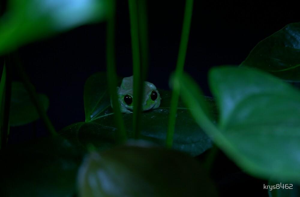 shh.... i'm hiding by krys8462