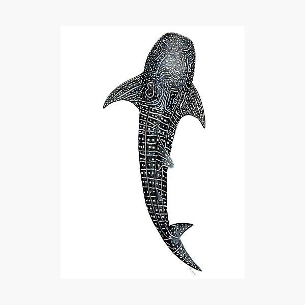 Walhai für Taucher, Haifischliebhaber und Fischer Fotodruck