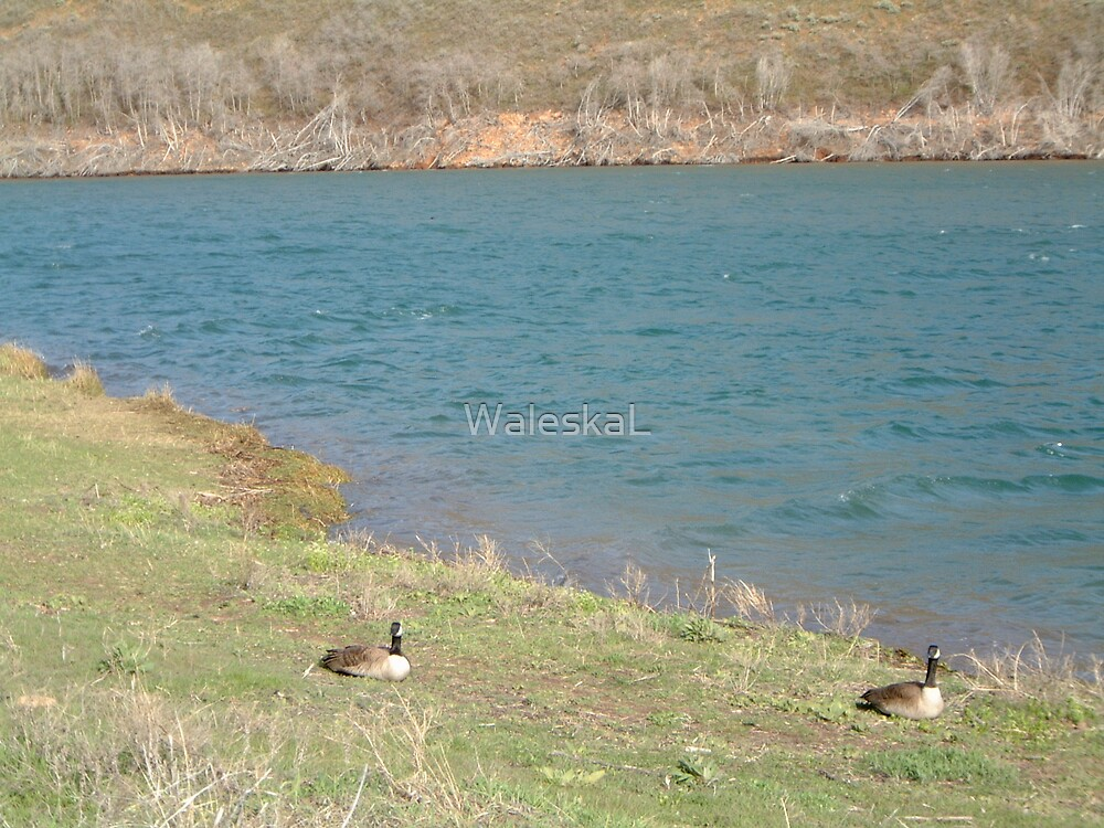 Following the Goose by WaleskaL