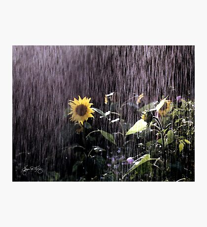 Sunflower Sunshower Photographic Print