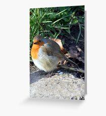 Robin at Bradford on Avon, Wiltshire, UK Greeting Card