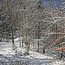 Snowy Woods by denise romano