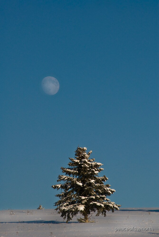 Moon and Tree by peaceofthenorth