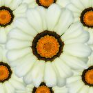 Daisy Cream and Brown by FollowingTLites
