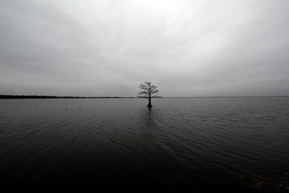 matamuskeet tree by ALEX GRICHENKO