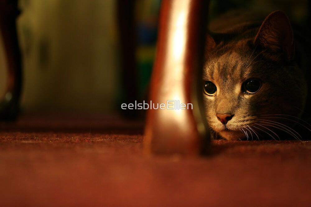 On the Prowl  by eelsblueEllen
