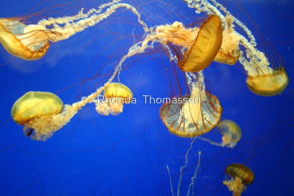 Jelly Wonder by Rhonda  Thomassen