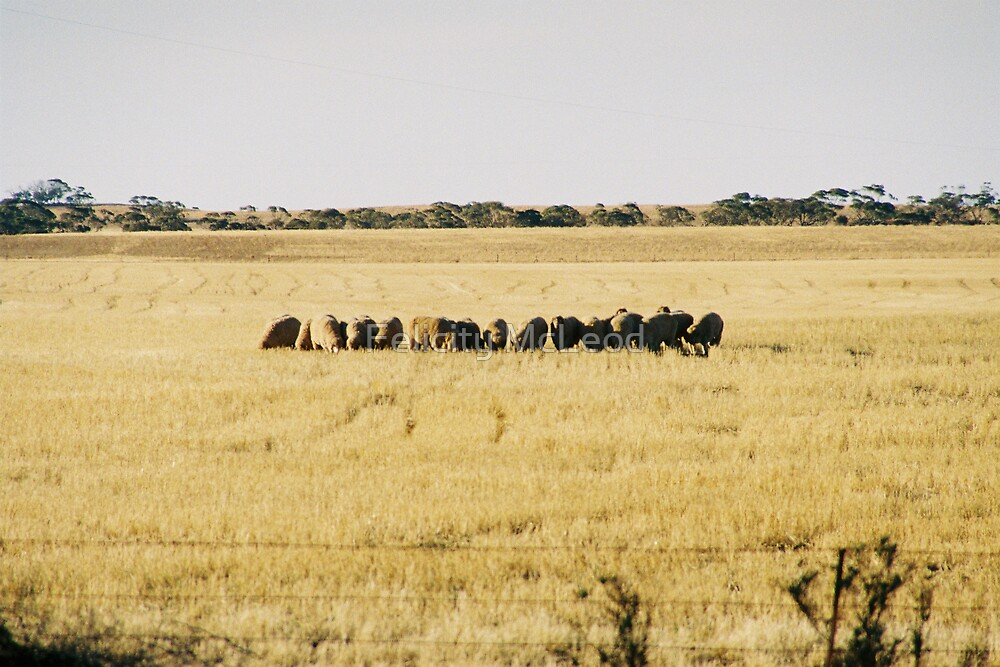 Grazing At A Days End by Felicity McLeod