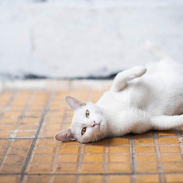 Kitty on Film by sssealegs