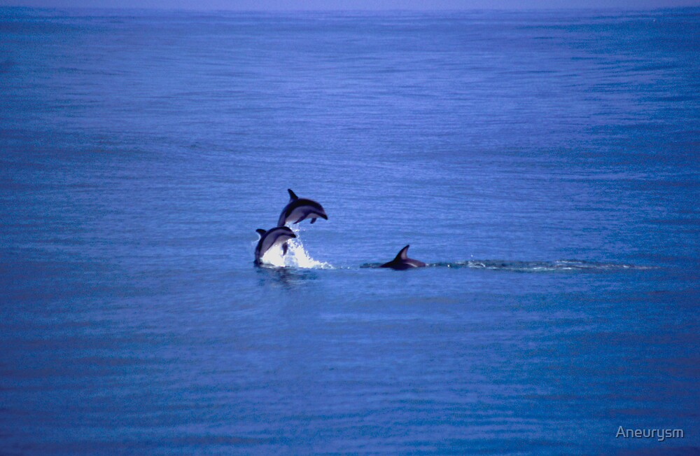Dolphins jumping by Aneurysm