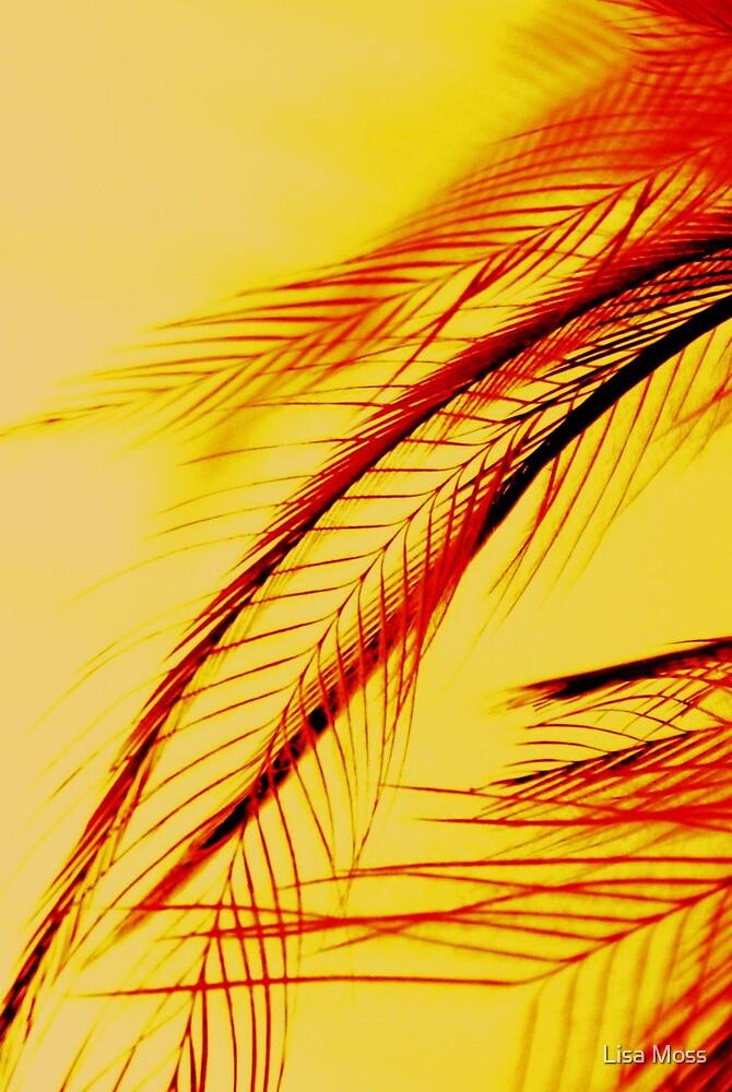 Feathers III by Lisa Moss