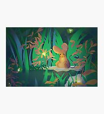Firefly Pond Photographic Print