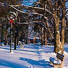 Snowy Path by Rae Tucker