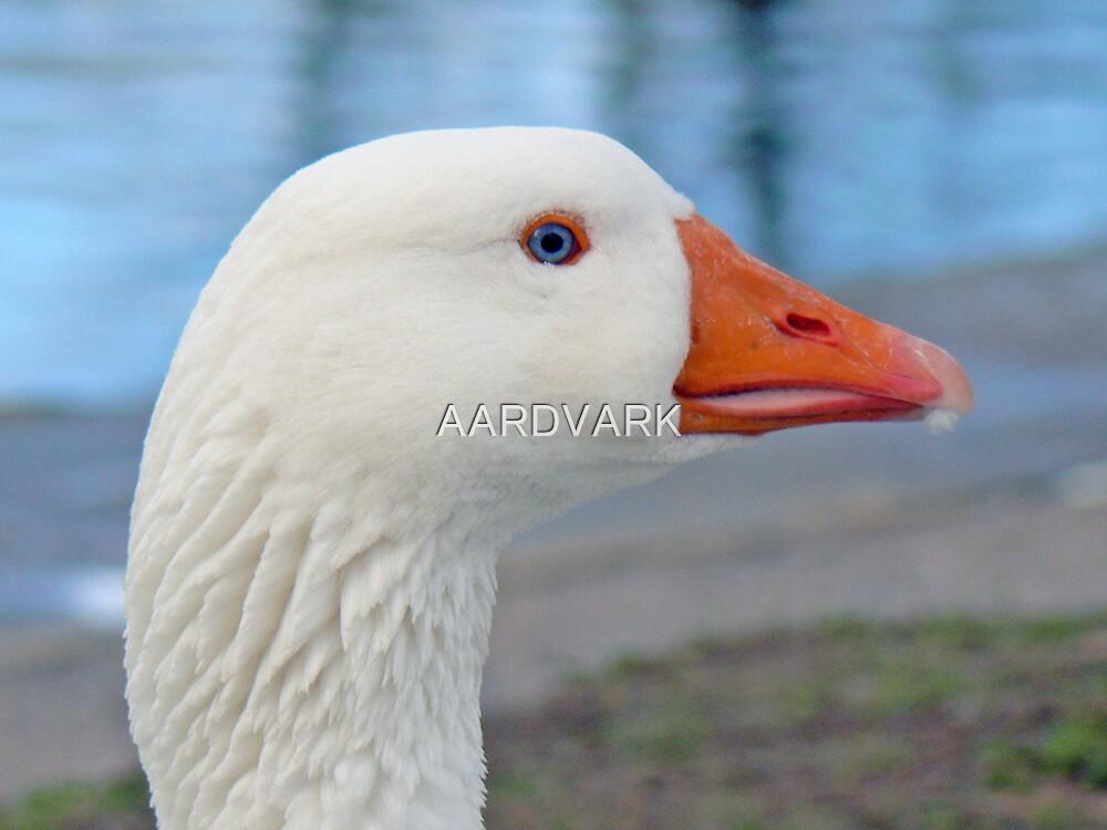 An Emden Goose by AARDVARK