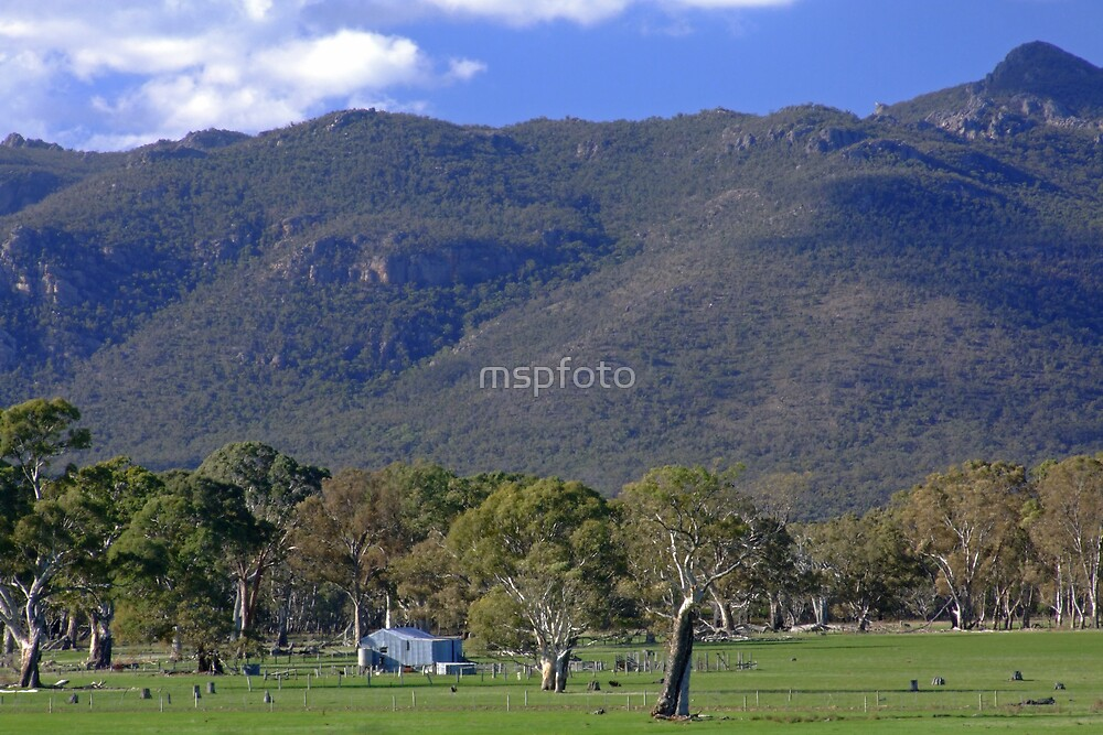 Woolshed In The Hills by mspfoto