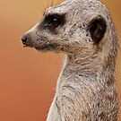 Profile of a Meerkat by David de Groot