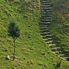 Stairs To Somewhere. by David Piszczek