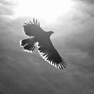 Silhoutte of a Hawk  by Judy Grant