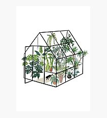 greenhouse with plants Photographic Print