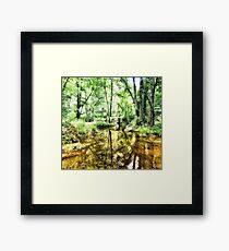 Forest of Youth Framed Print