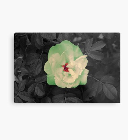 Colors Flower Metal Print