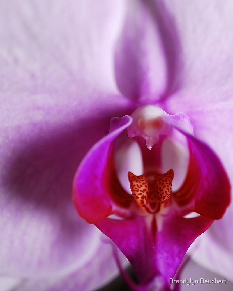 Pretty Purple Orchid by Brandylyn Beuchert
