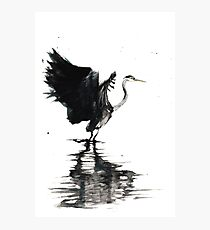 Heron Stretching Wings Photographic Print