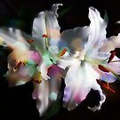 Color On White Lilies by hurmerinta