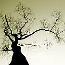 Entanglement by David Piszczek