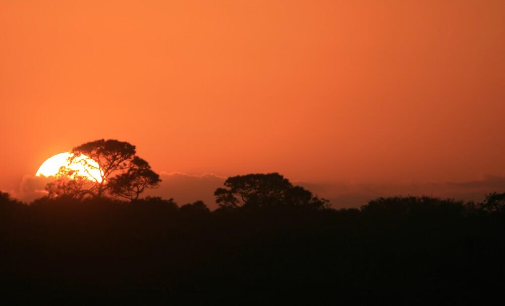 The Setting Sun by Karen Kaleta