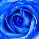 Abstrakte Makro blaue Rose von MMPhotographyUK