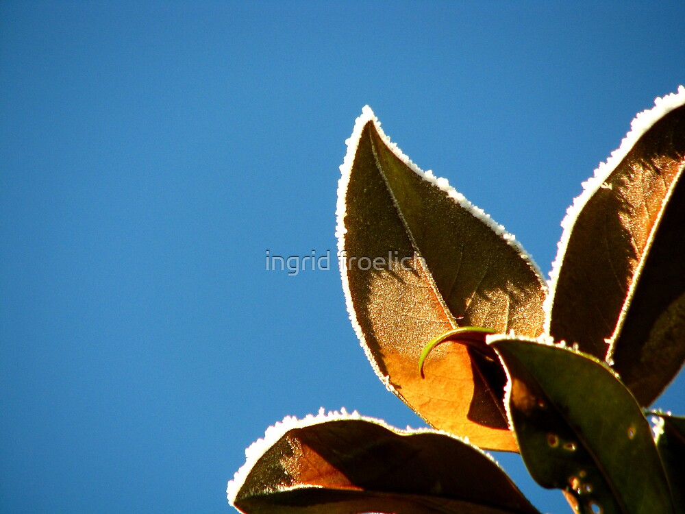 looking up by ingrid froelich