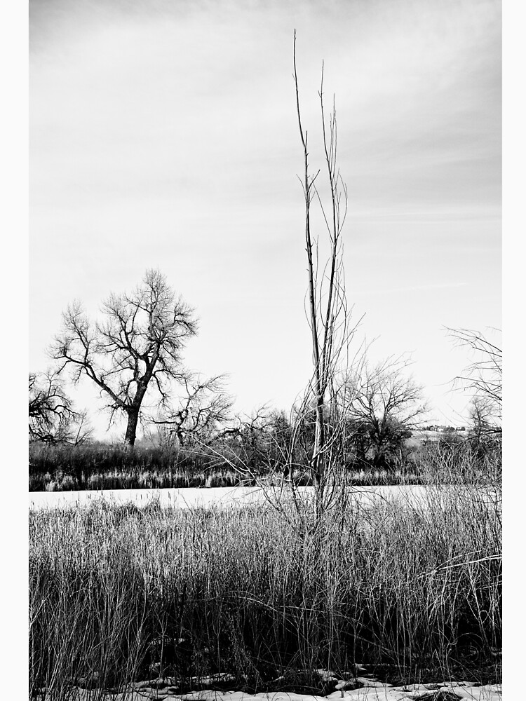 Cherry Creek Winter Study 1  by bobmeyers