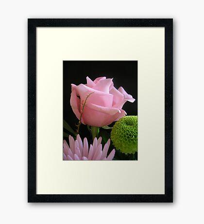 Birthday Rose Framed Print