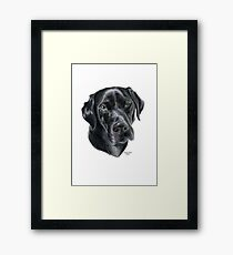 Black Labrador Framed Print